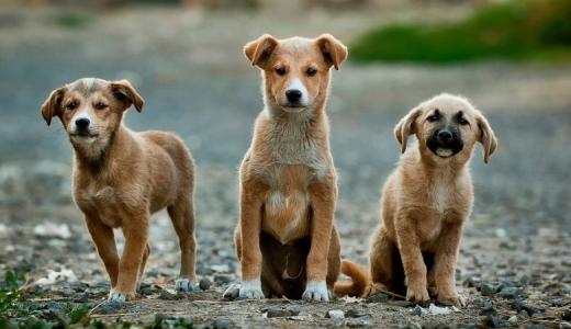 【激臭注意】犬のお尻に違和感?肛門腺を絞る合図かも!?【肛門絞り】
