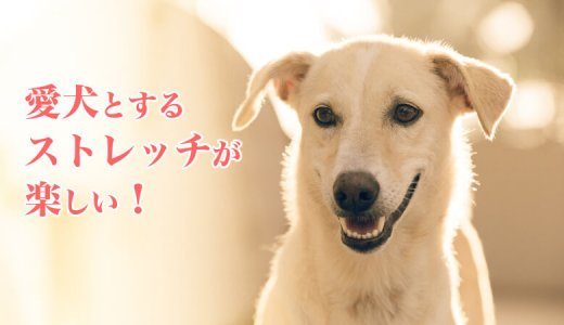 ペットの犬とする筋トレ&ストレッチが楽しい!ターザン750号「犬と楽しむフィットネスライフ。」がオススメ。